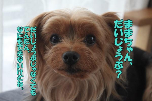 IMG_901501.jpg