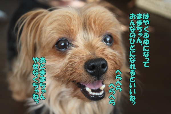 IMG_901901.jpg