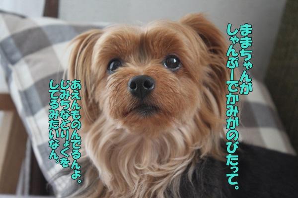 IMG_903301.jpg