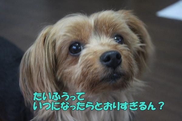 IMG_903701.jpg