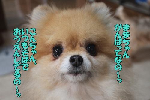 IMG_910001.jpg