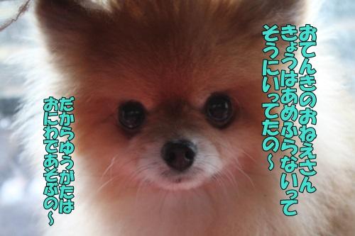 IMG_910501.jpg