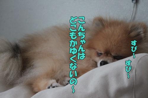 IMG_912601.jpg