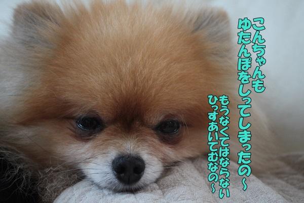 IMG_9256003.jpg