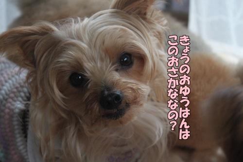 IMG_930111.jpg