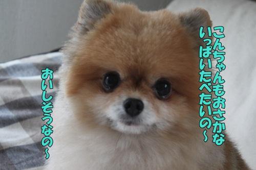 IMG_930311.jpg