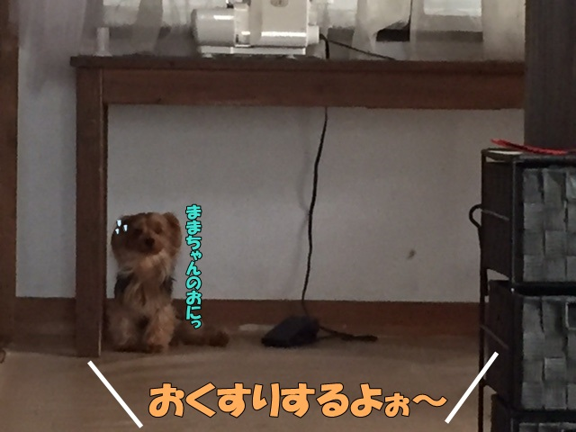image1081004.jpg