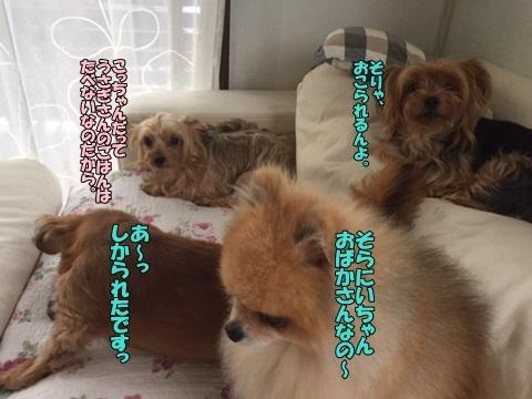 image1082701.jpg