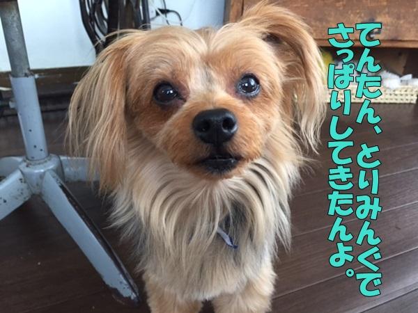 image1090605.jpg