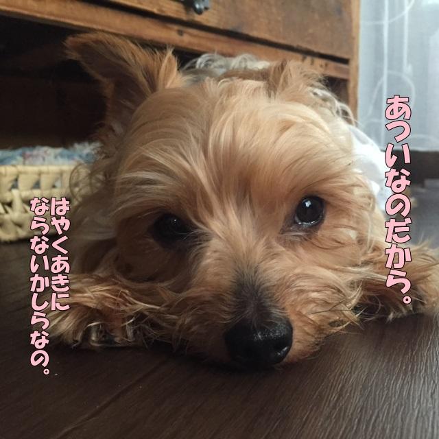 image2081002.jpg