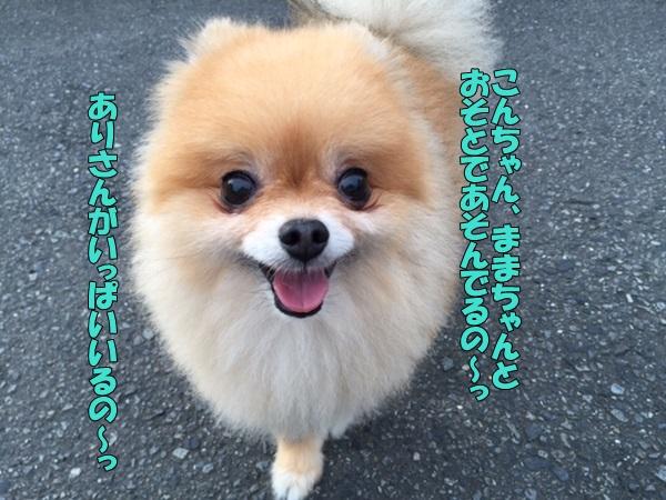 image2082202.jpg