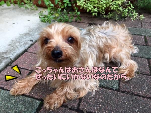 image3082203.jpg