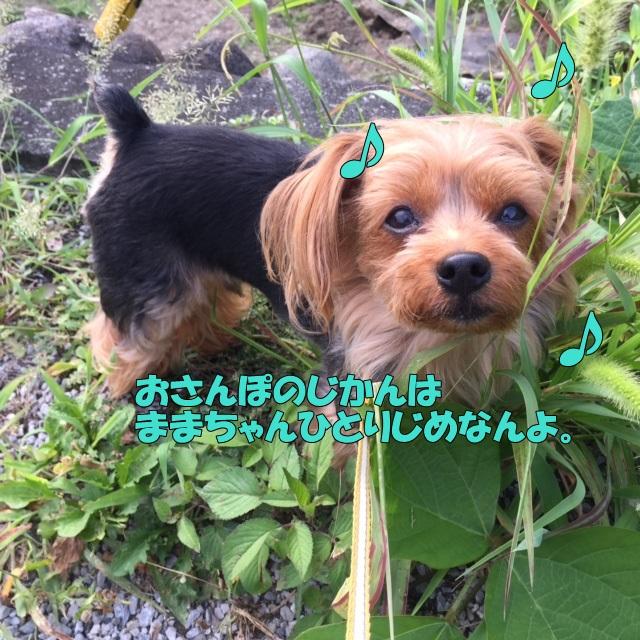 image4080704.jpg