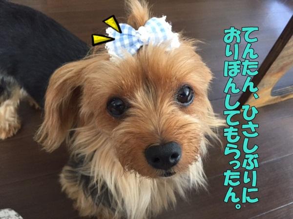 image4082704.jpg