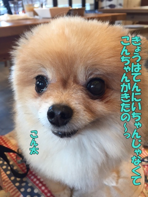 image903.jpg