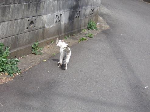 通りすがりに見かけた猫(759)