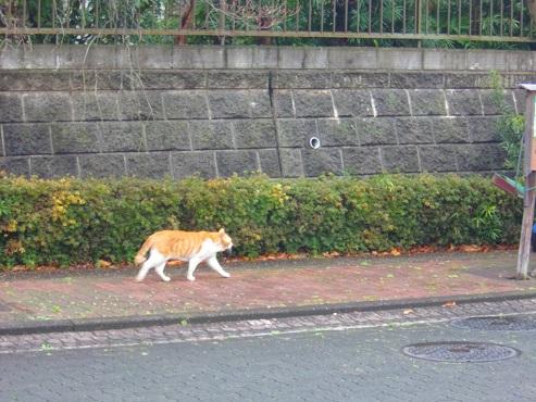 通りすがりに見かけた猫(760)