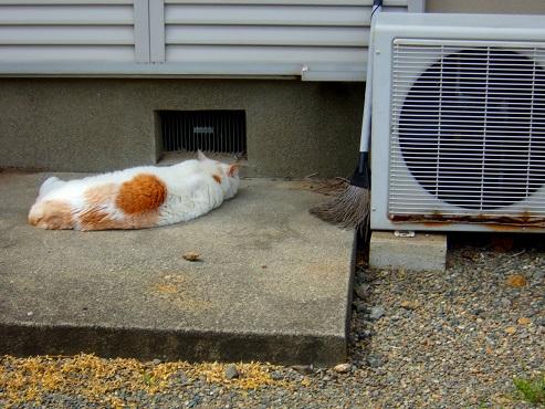 通りすがりに見かけた猫(762)