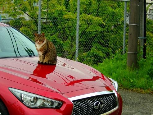 通りすがりに見かけた猫(763)