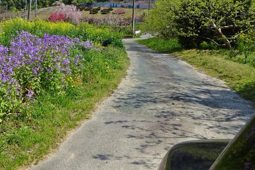 春の景色の中で。