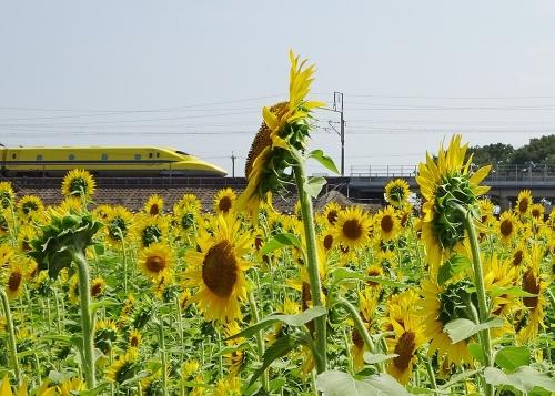 黄色の幸せ♪