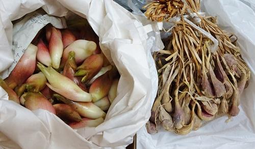 茗荷と浅葱