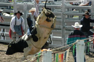 rodeo (40)