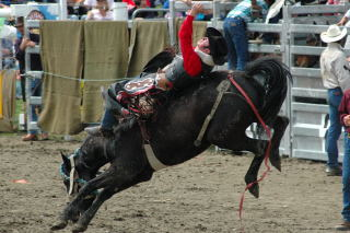 rodeo (220)