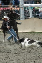 rodeo (303)