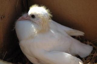chick (16)
