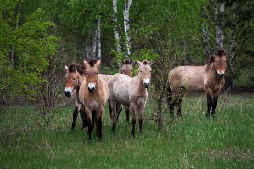 事故から30年、チェルノブイリ原発周辺があらゆる種類の動物たちの住む楽園に