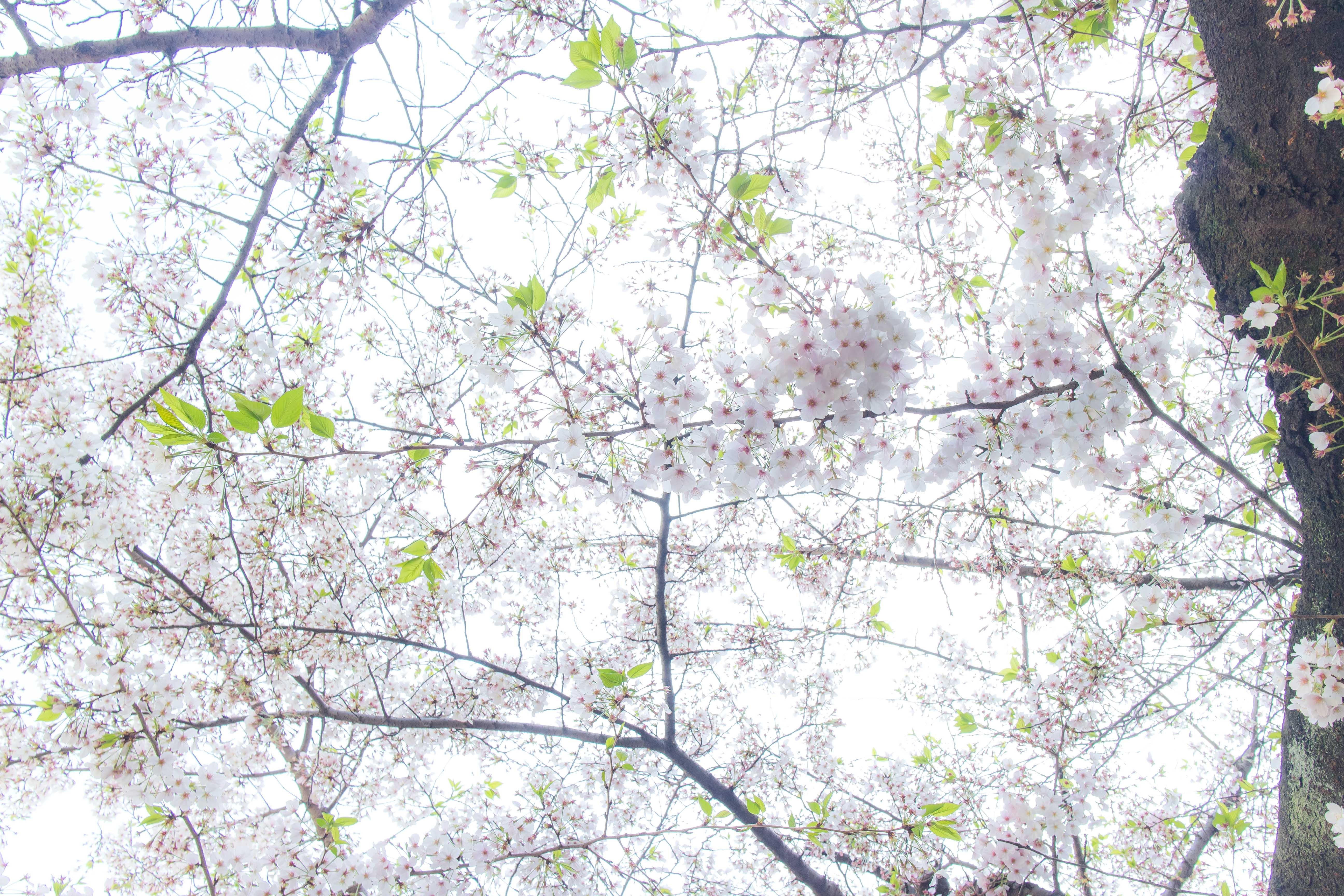 土曜日の午前、恵比寿にて(1)
