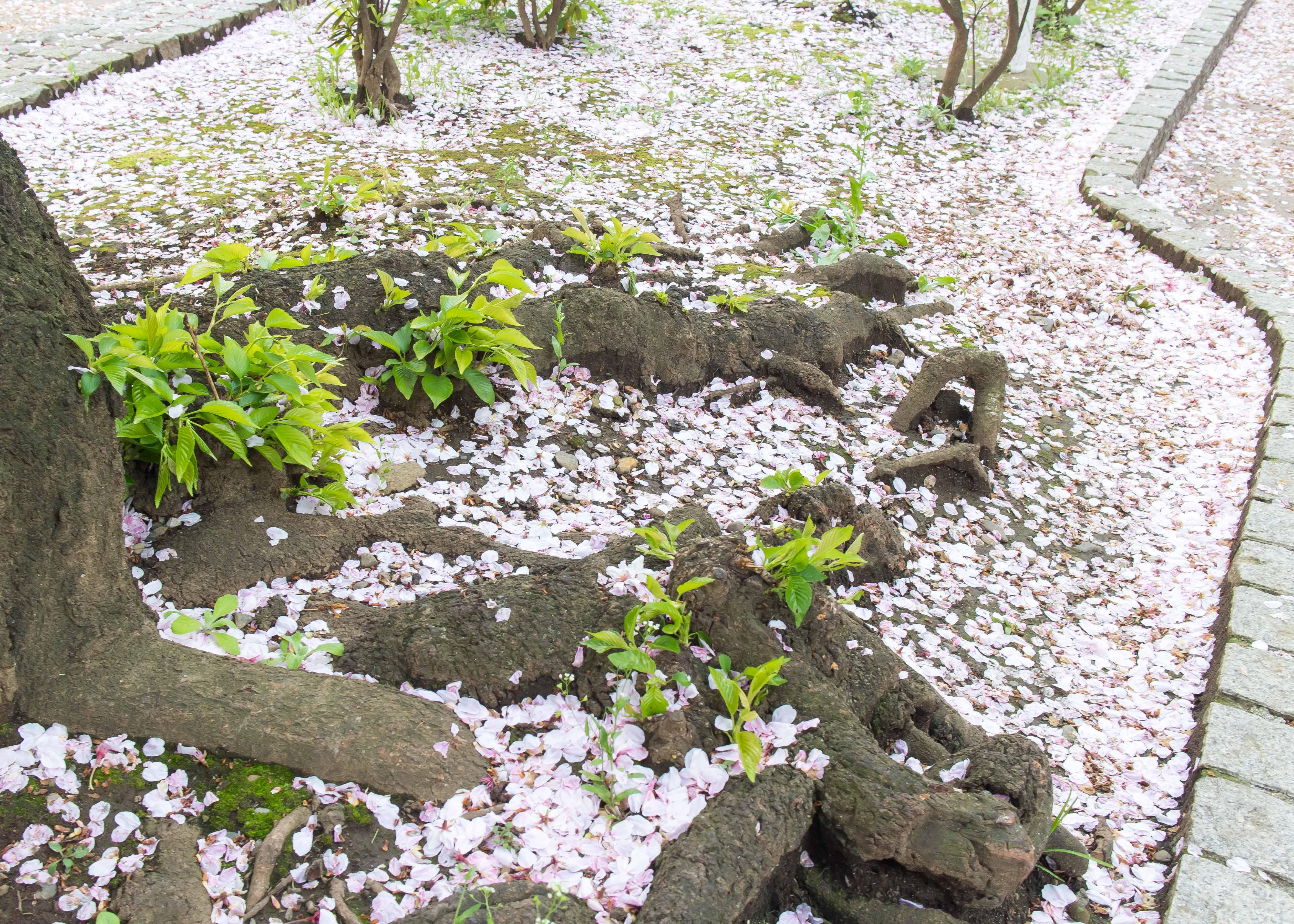 土曜日の午前、恵比寿にて(2)