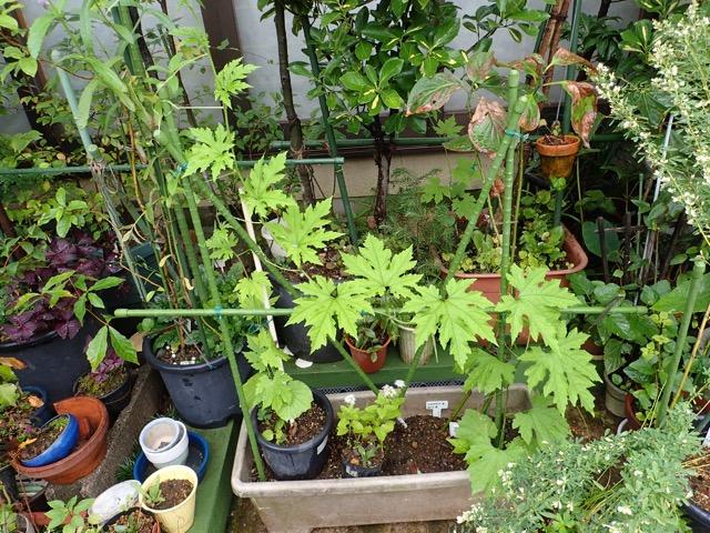 不明のツル植物