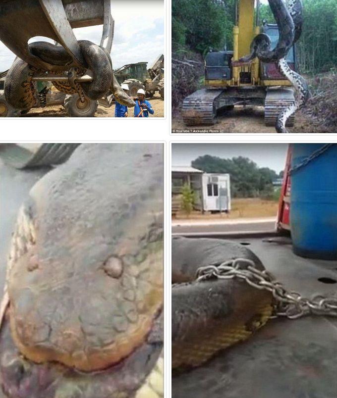 【アナコンダ】ブラジルの洞窟で「超巨大なヘビ」が見つかる…体長10メートル、重さ400キロ