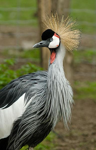 千葉の公園に「アフリカの鳥」が住み着いていると、ネットや口コミで話題に