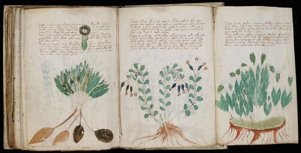 Voynich_Manuscript_(170).jpg