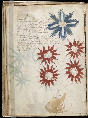 Voynich_Manuscript_(32).jpg