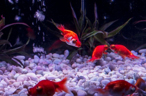 fish285736876.jpg