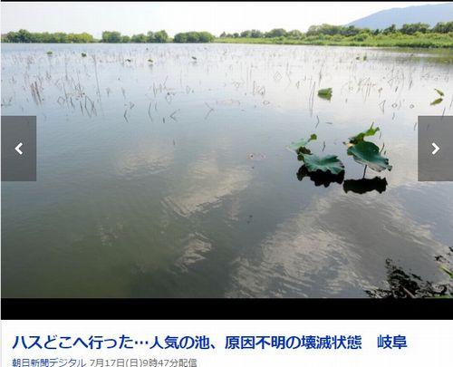 【異変】今度は岐阜で「ハスの花」が消える…周辺のハスに異常なし「原因不明」で担当者も困惑