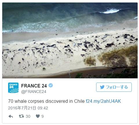 【前兆】チリ南部パタゴニアの海岸に「クジラ」約70頭が打ち上げられる!