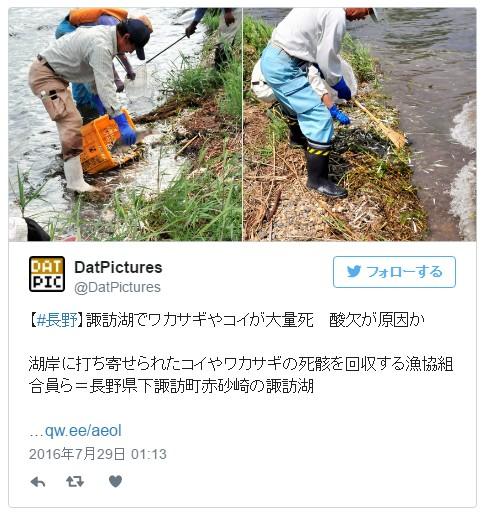 長野県・諏訪湖でワカサギが全滅か…コイなども湖岸に大量に打ち寄せられているが発見される