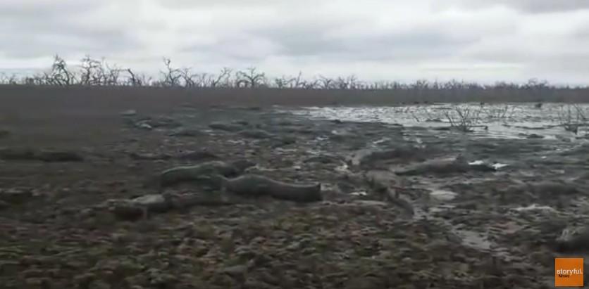 【パラグアイ】最悪の「干ばつ」で河川が渇水…数千匹のワニも危機