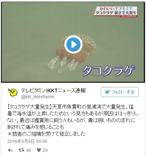 熊本・天草市の港で「タコクラゲ」が大量発生!原因ハッキリせず