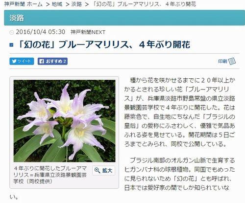 【幻の花】兵庫県で一生に一度出会えるかどうかという珍しい花「ブルーアマリリス」が開花