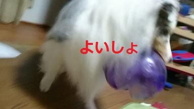MOV_8579_000015.jpg
