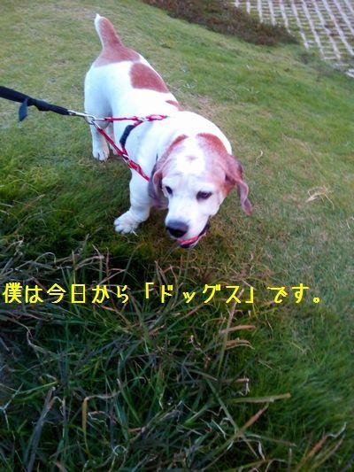 AS01M_20161106_165842.jpg