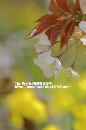 IMG_2016_04_09_9999_51.jpg