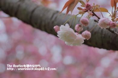 IMG_2016_04_17_9999_114.jpg