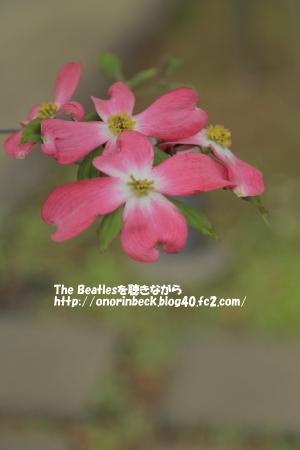 IMG_2016_04_23_9999_245.jpg